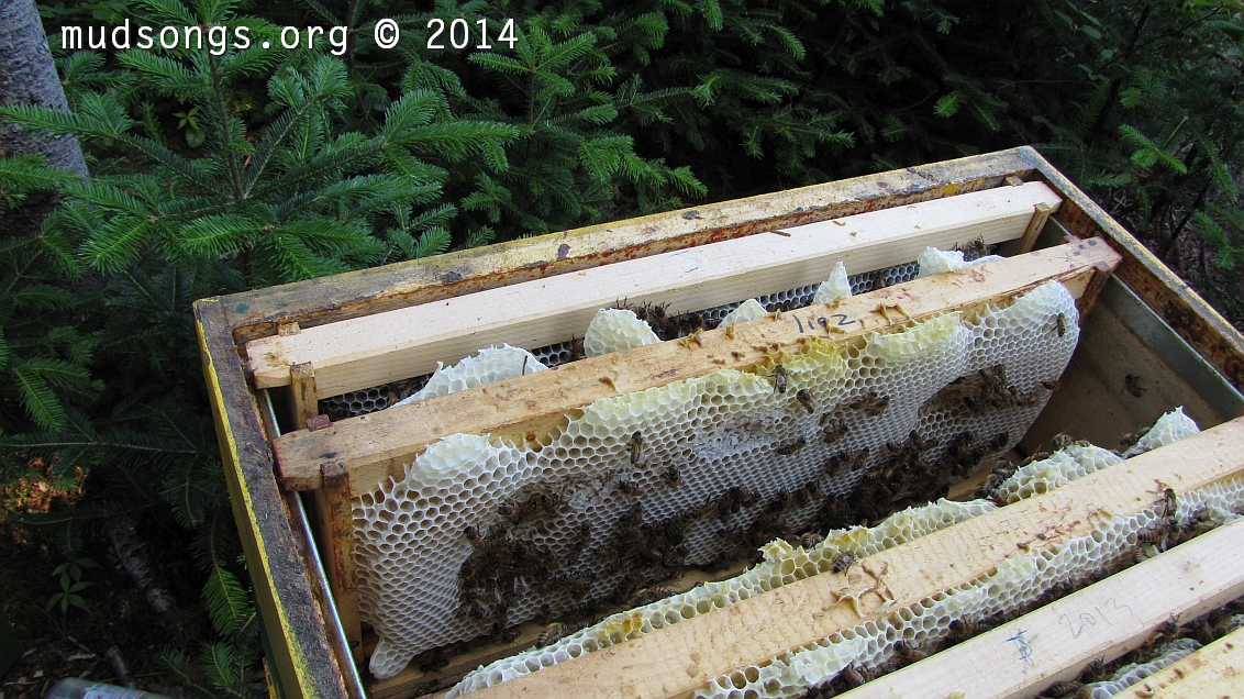 IMG_0382-thick-comb