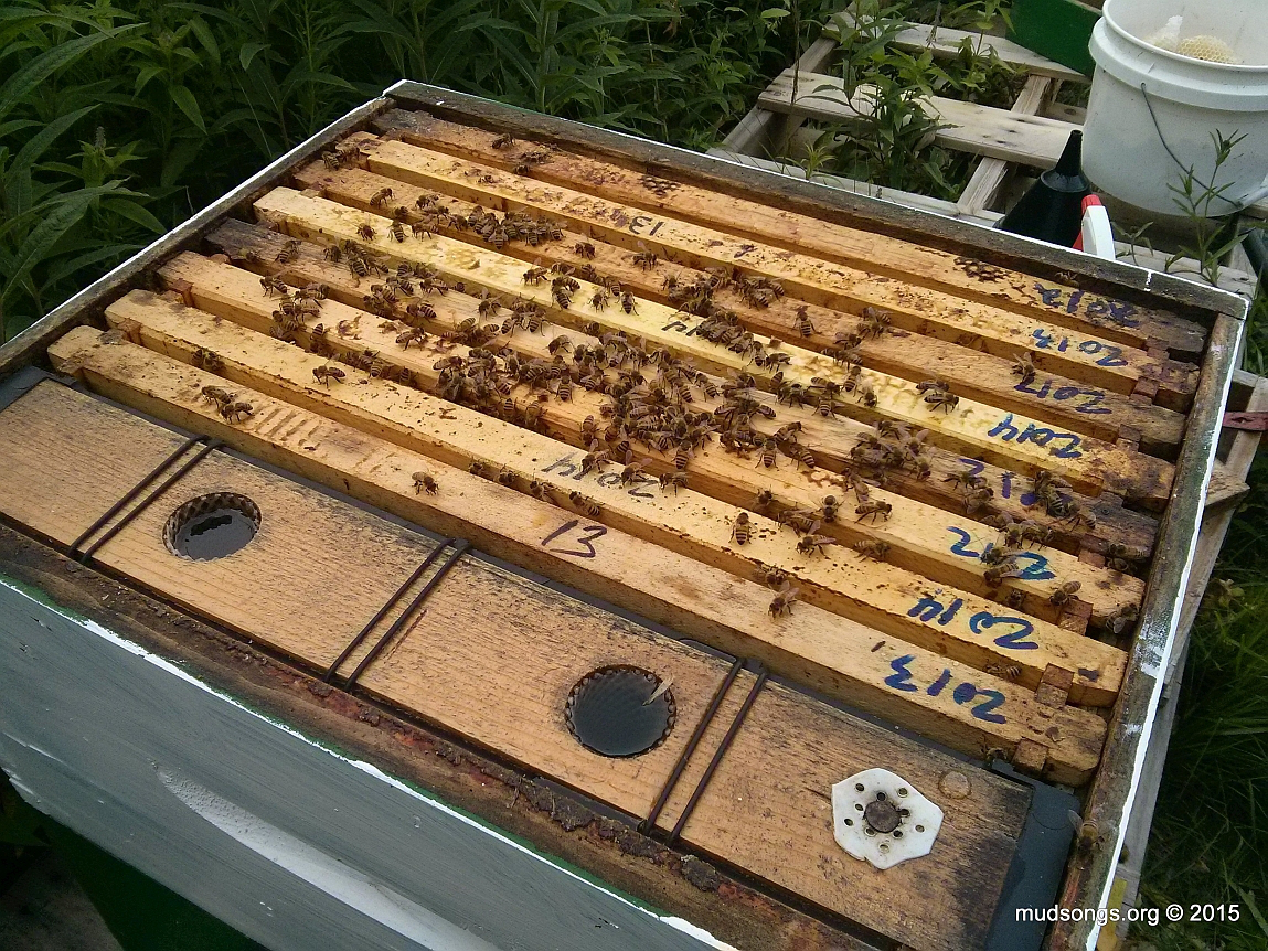 Freshly filled frame feeder. (July 29, 2015.)