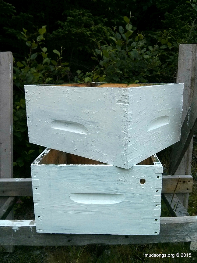 Painting my green hive boxes white (July 26, 2015.)