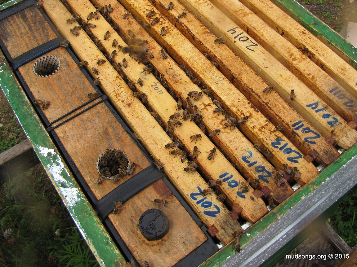 Refilling hole plugged up after the frame feeder is filled. (August 10, 2015.)