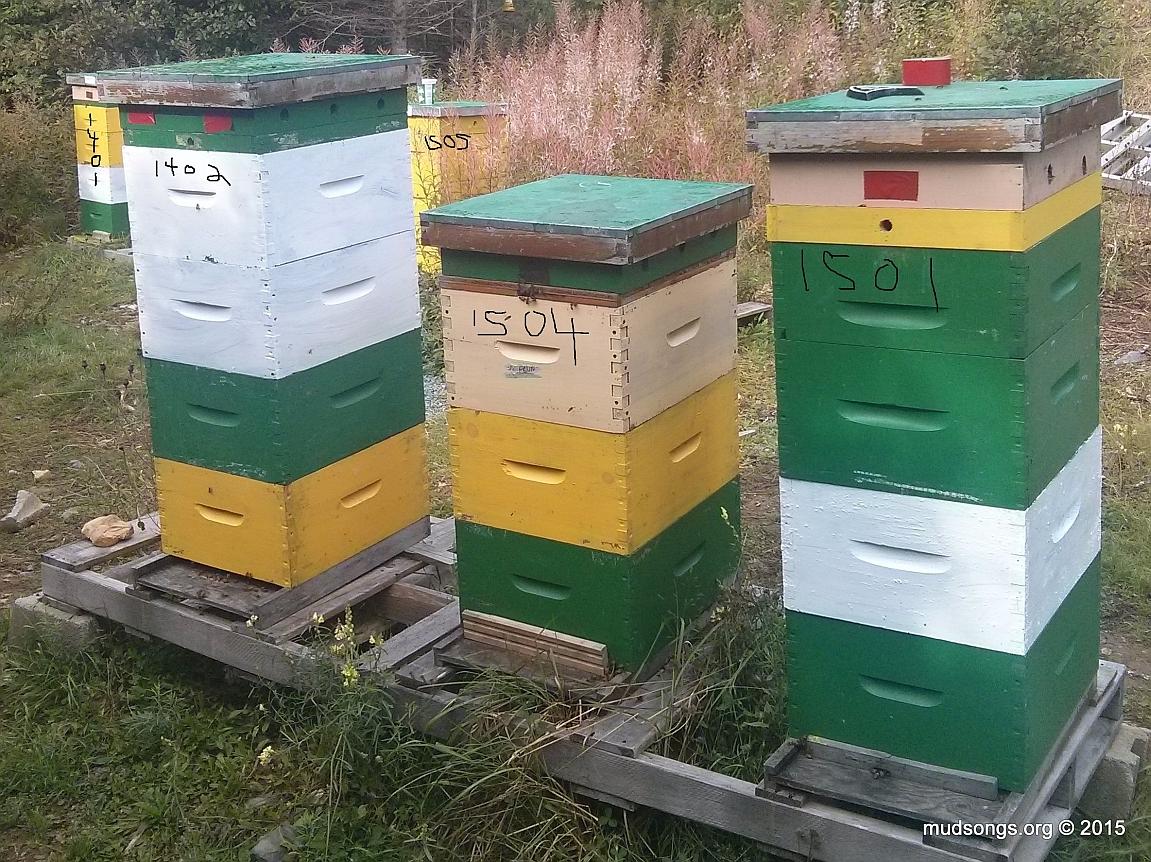 1401 (3 deeps + honey super); 1402 (4 deeps); 1505 (3 deeps + frame feeder); 1504 (3 deeps + frame feeder); 1501 (3 deeps + honey super). September 23, 2015.